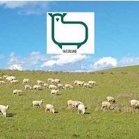 Naturlamb: productos antiescaras Asister