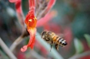 abeja y demencia