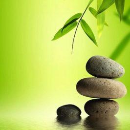 """Beneficios de Bambú: """"Boom de Bambú"""""""