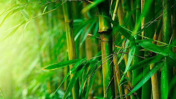 Beneficios de la tela de bambú